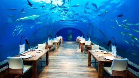 水下餐厅|港丽岛6天4晚自由行,马尔代夫旅游要多少钱,马尔代夫旅游报价,马尔代夫岛屿排名