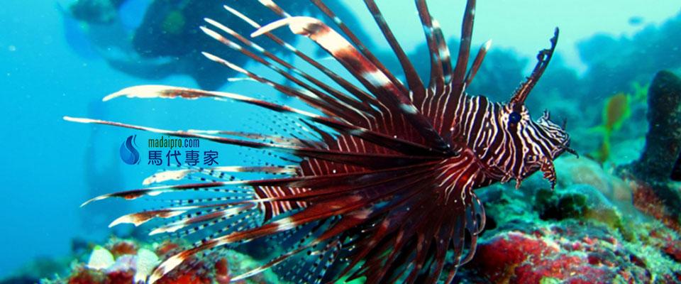 马尔代夫图片,马尔代夫旅游图片,艾雅度岛,Eriyadu Island Resort