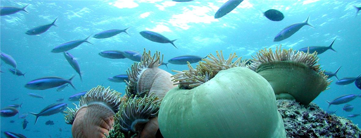 馬爾代夫圖片,馬爾代夫旅游圖片,奧露島,oblu by atmosphere