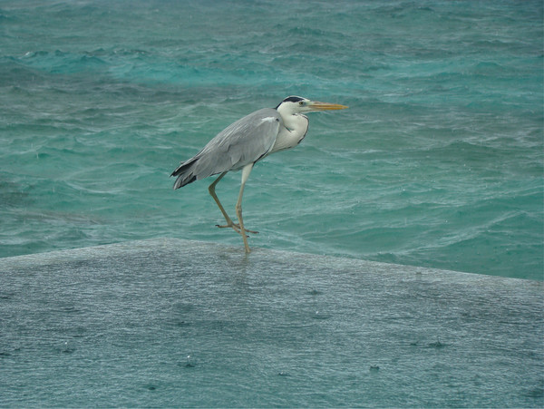 卓美亚维塔维丽岛自助游图片