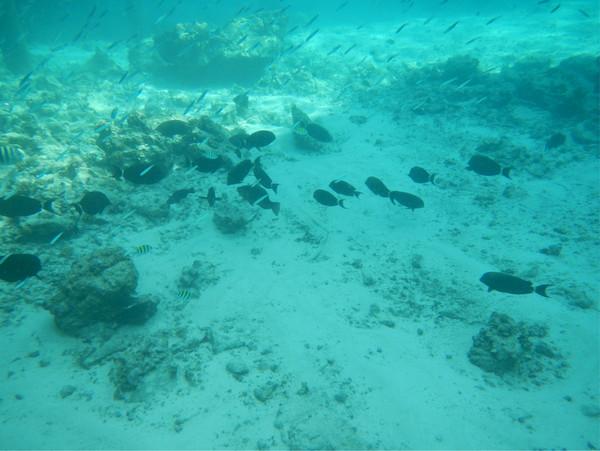卓美亚维塔维丽岛旅游攻略图片