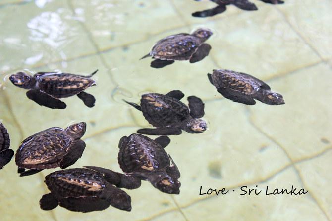 海龟保育院:门票500卢比