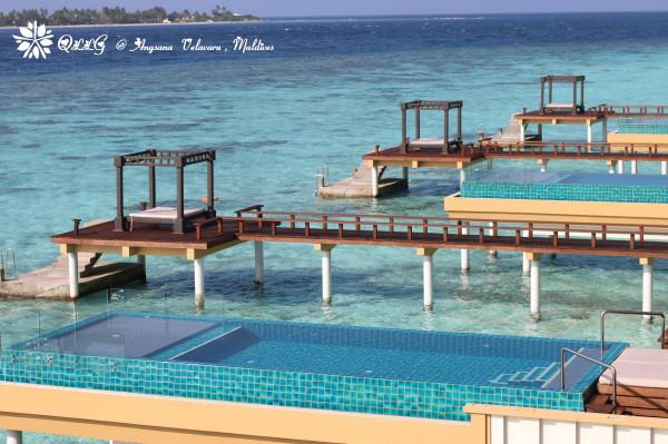 迎马年游马代-马尔代夫薇拉瓦鲁岛(av岛,海龟岛)7天5晚游记